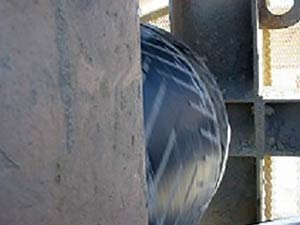Worn grip system on conveyor pulley